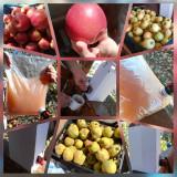 Suc natural de mere (si gutui) 100% BIO, pasteurizat – 21 lei/punga 3.2L