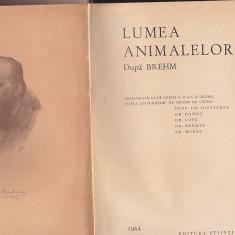 LUMEA ANIMALELOR DUPA BREHM