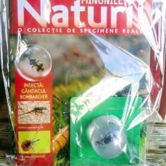 Minunile Naturii - Insectă - Gândacul bombardier , revistă plus specimen real,