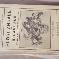 Flori Anuale si Bisanuale 1932