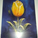 Poster pictura lalea - rama foto clip
