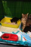 Se cauta nume de pisica si casa de oameni