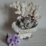 Coral decor cu scoici, dimensiuni 18 x 15 cm