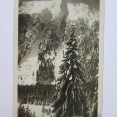 Carte postala foto cenzurata K.u.k. WWI cu stampila Ismail Port aproximativ 1917, Circulata, Fotografie