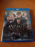 Animale Fantastice si unde le poti gasi  Blu-ray 2016, subtitrat in limba romana, BLU RAY, warner bros. pictures