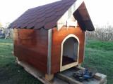 Cusca de caine izolata
