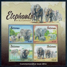 BOTSWANA 2016 ELEFANTI