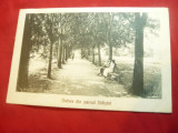 Ilustrata- Saliste- Parcul ,circulat 1929 Ed. Dadarlat