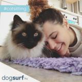 Cazare pisici la pet sitteri de incredere