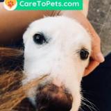 Cazare caini pisici la pet sitteri verificati si de incredere Cluj