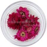 Flori uscate ciclamen