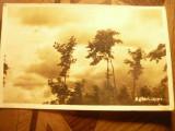 Fotografie - Carte Postala -Peisaj  Natura - marca Agfa-Lupex cca. 1945, Necirculata