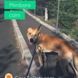 Plimbare caini - Dog Walker de incredere si verificati