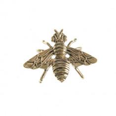 Brosa metalica, insecta aurie