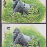 DB Congo Fauna Gorila 2 SS Perf Imperf MNH, Nestampilat