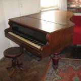 Vand pian cu coada scurta