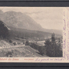 SINAIA   GURA  PADUREI   CLASICA   CIRCULATA 1902, Printata