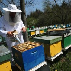 APICULTURA - totul despre albine si apicultura (DVD)