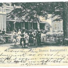 3039 - BUZIAS, Romania, Timis, Litho  - old postcard - used - 1903, Circulata, Printata