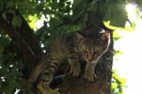 Donez Pisici