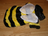 Costum carnaval serbare albina albinuta pentru catei marime M