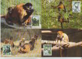 Honduras 1990 - maimuta paianjen, serie maxima
