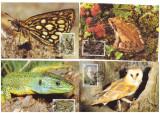 Jersey 1989 - Fauna WWF serie maxime