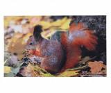 Covoras de intrare Squirrel 46x76 cm