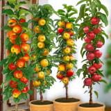 Pomi fructiferi  columnari pitici,meri.ciresi,caisi,nectarin-10+5 gratis anul 3
