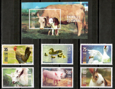 CUBA 2019 ANIMALE DOMESTICE foto