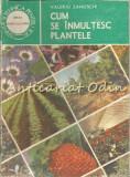 Cumpara ieftin Cum Se Inmultesc Plantele - Valeriu Zanoschi