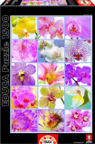 Puzzle Educa 1500 piese Flowers Collage