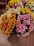 Crizanteme, [en.casa]