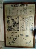 Planse vechi medicina decor