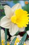 Narcise Goblet ( 5 bulbi)