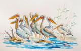 Acuarela pelicani la siesta ( tablouri tablou picturi pictura decor )