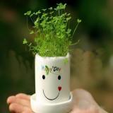 Ghiveci cu seminte Happy Day