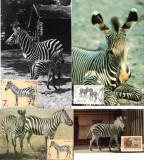 Fauna, Zebre, Maxime