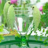 ASCLEPIAS SYRIACA - planta papagal -  5 seminte pentru semanat
