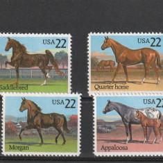 Fauna ,sport ,cai de rasa ,SUA.