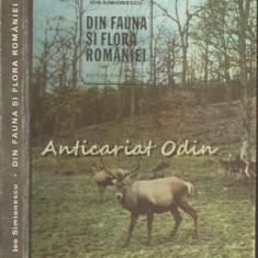 Din Fauna Si Flora Romaniei - Ion Simionescu