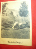 Felicitare de Paste 1948 Oi in peisaj ,francat 60g rosu Austria ,circ.Bucuresti, Circulata, Printata