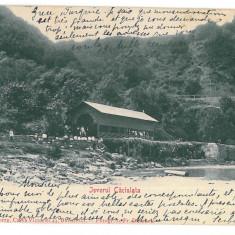 4383 - CACIULATA, Valcea, Romania - old postcard - used - 1903, Circulata, Printata