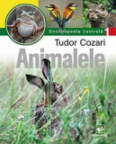 Animalele. Enciclopedie ilustrata T. Cozari/Tudor Cozari, ARC