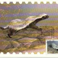 URSS 1987 CM, Fauna DIHOR, Maxime