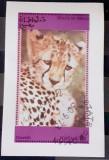 Oman 1973  fauna , animale , leopard bloc used