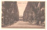 SV * Suceava  *  ALEIA GAREI  *  GARA BURDUJENI  *  anii '20, Circulata, Necirculata, Fotografie, Printata