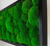 Tablou vegetal ARTFLORA Premium BallMoss 25x25cm