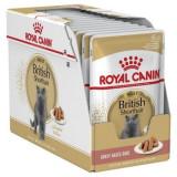 Royal Canin British Shorthair Adult, bax hrană umedă pisici, (în sos), 85g x 12