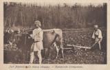 Carte Postala Salutari din Romania - Port Popular - La Munca Campului, Circulata, Printata